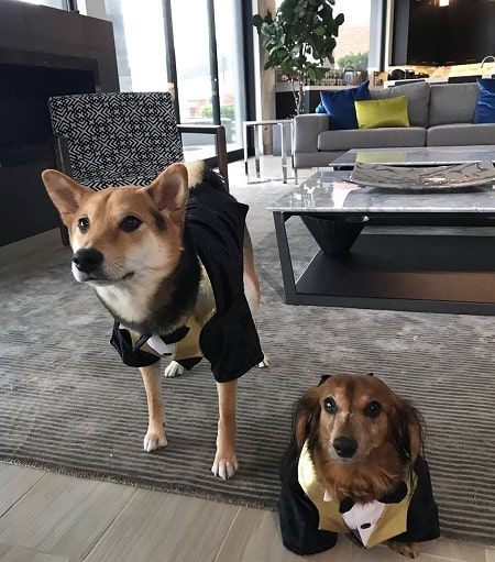 Picture of Ryan Higa's two dog named Teddy and Marley wearing same matching dress.