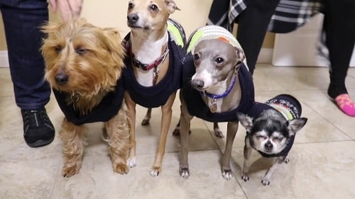 A picture of All four Jenna Marbles' dogs.