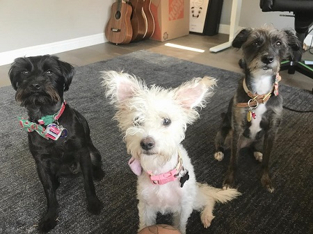Roi Wassabi three rescue dogs named Oogi, Callie, and Izzi.